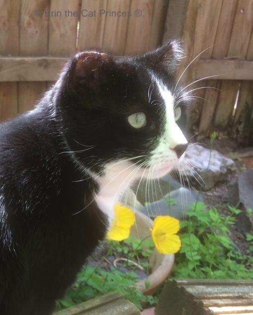 Garden time. © Erin the Cat Princess ®